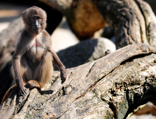 Lessons from a mama monkey (the silent epidemic that's not being talked about)